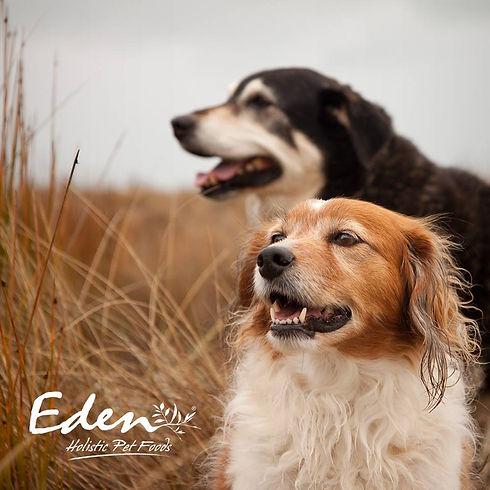 Eden-hund-2.jpg