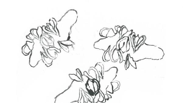 Banksia2.jpg
