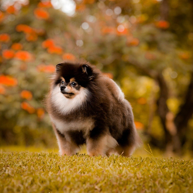 thumbnail_Feb092012_4558.jpg