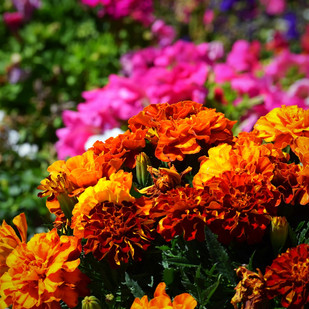"""Mountain God Bouquet"""