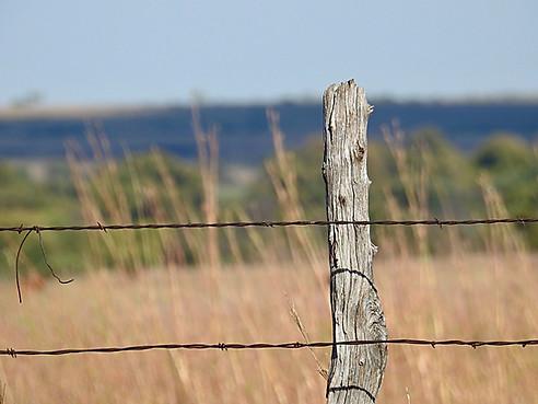 """Fence Line"""