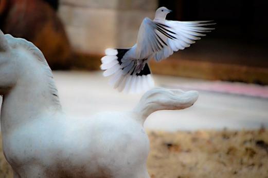 """""""Silver Wings"""""""