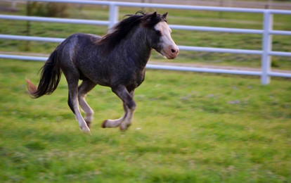 """Winged Stallion"""
