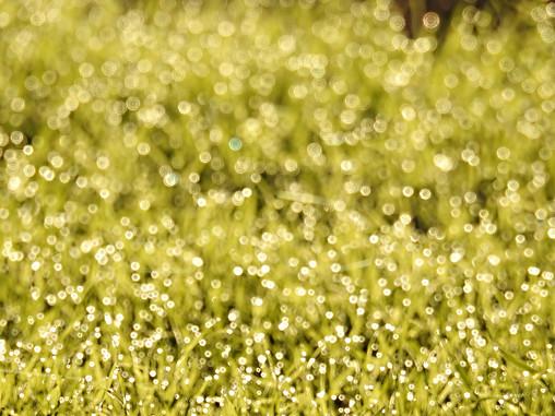 """""""Morning Dewdrops"""""""