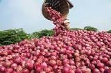 Onion Producers again threaten to stop the supply of onions down to the South.