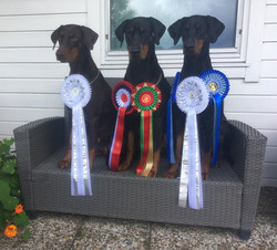 a new CH, 2 RES.CAC & Winners rosettes from 2019 competitions