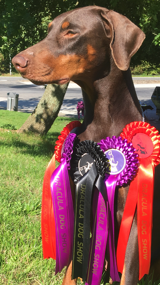 Vilje with her rosettes