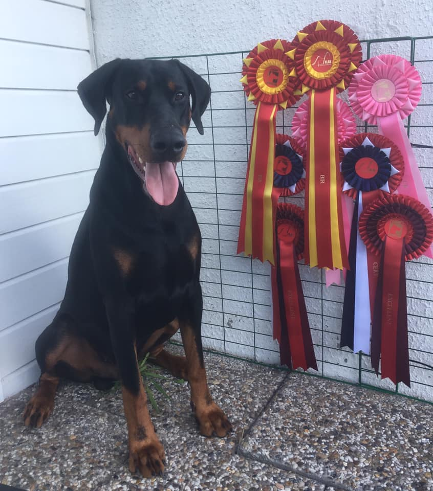 Marco with his ribbons