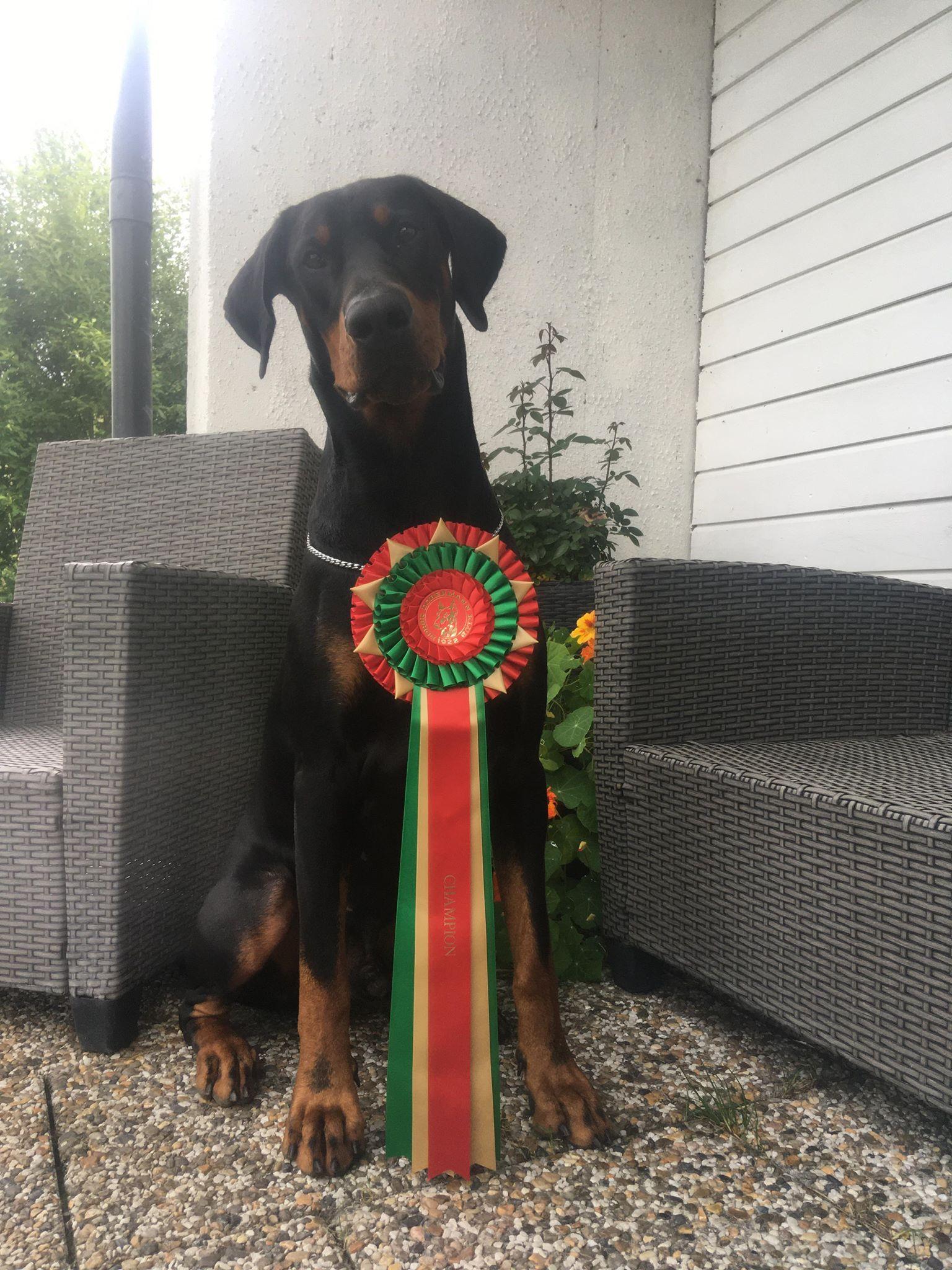 Norwegian Champion