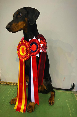 Zula BEST OF BREED and CAC