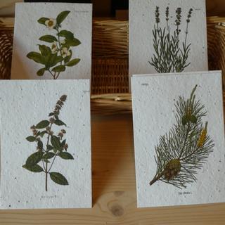 Grusskarten aus Samenpapier. Das Seedpaper kann nach Gebrauch ganz einfach zerrissen und gepflanzt werden.