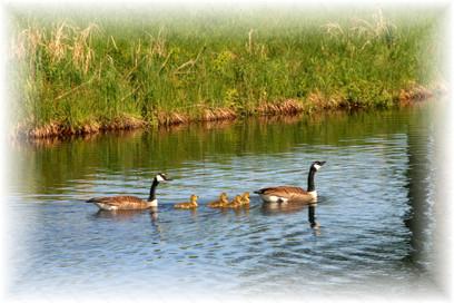 9a Duck duck goose.jpg