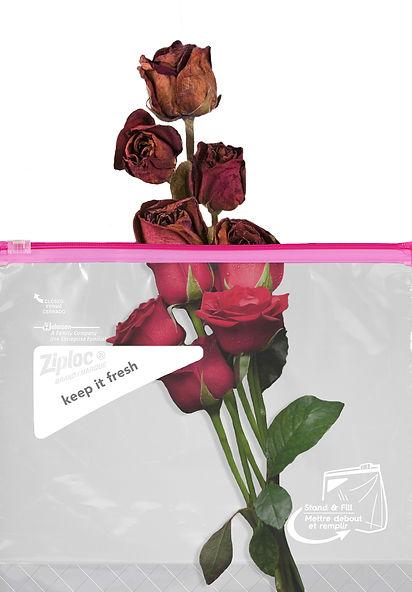 Ziploc Rose- cropped 2 drop shadow.jpg
