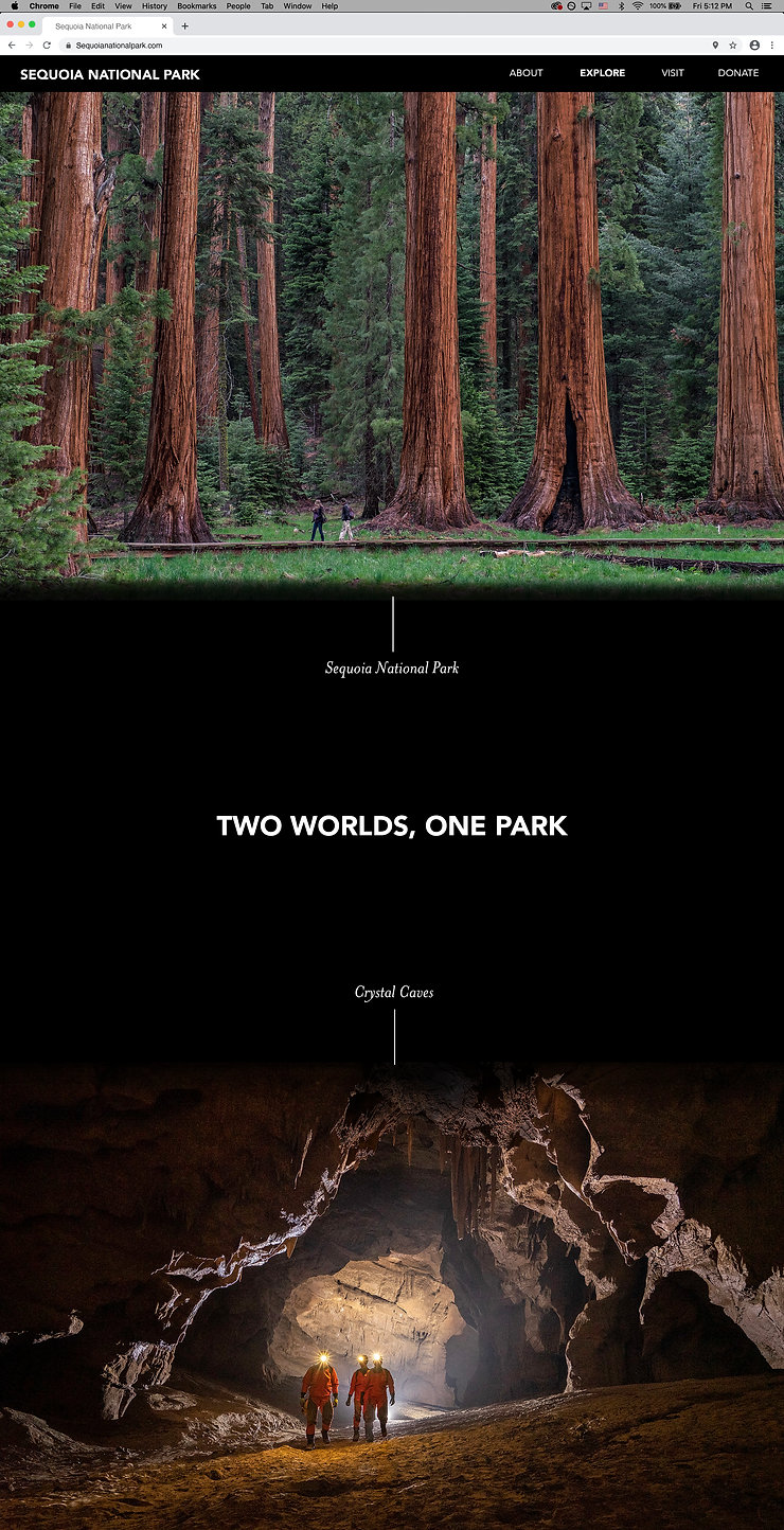 Sequoia Website Design.jpg