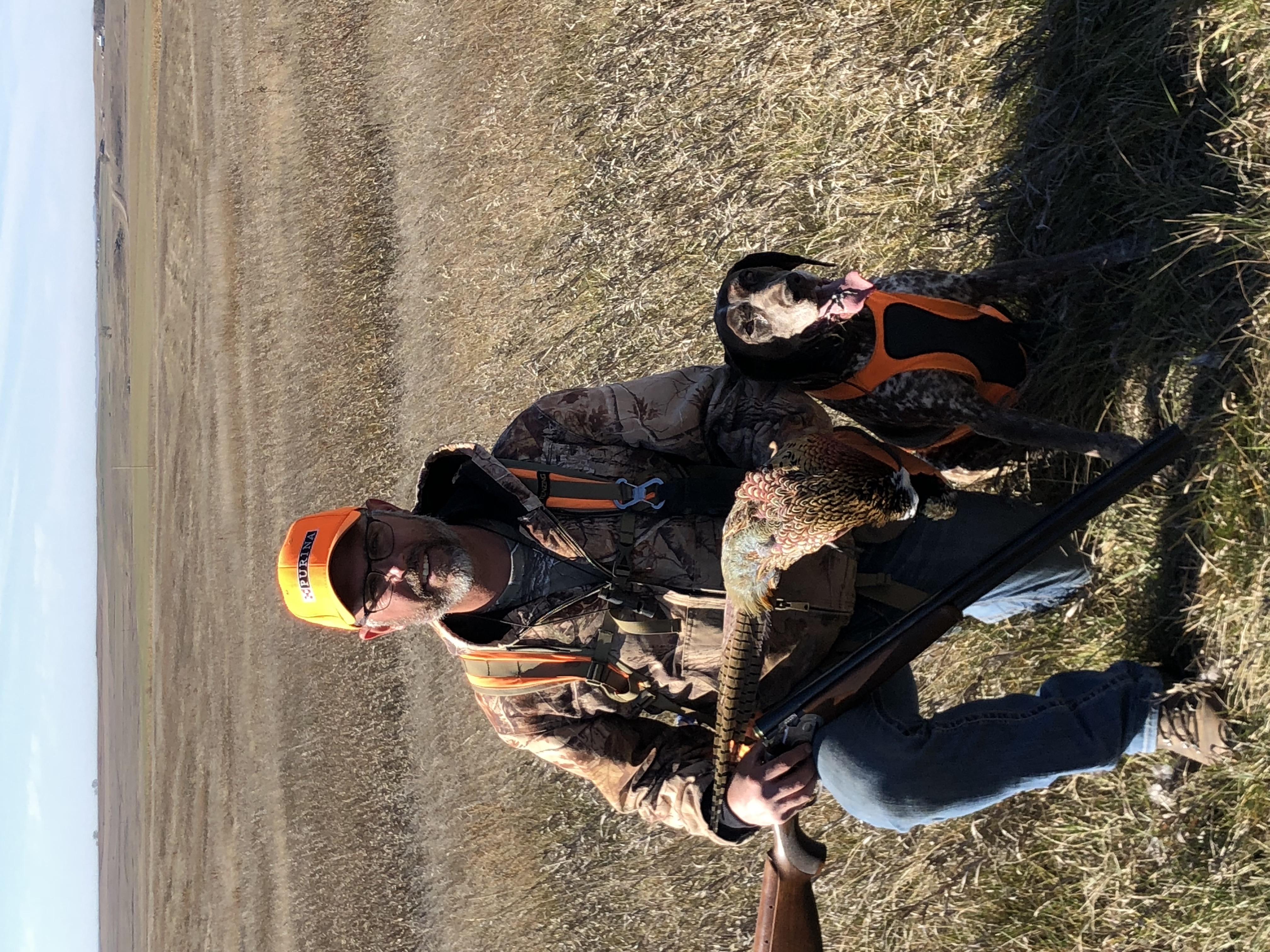 Pheasant hunting - 2018
