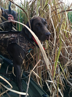 Duck hunting - 2017
