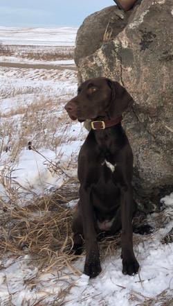 Hunting in 2019
