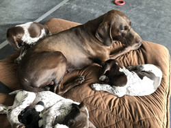 Anna and her pups
