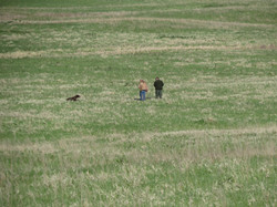Derby - field work