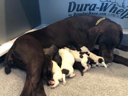 New momma