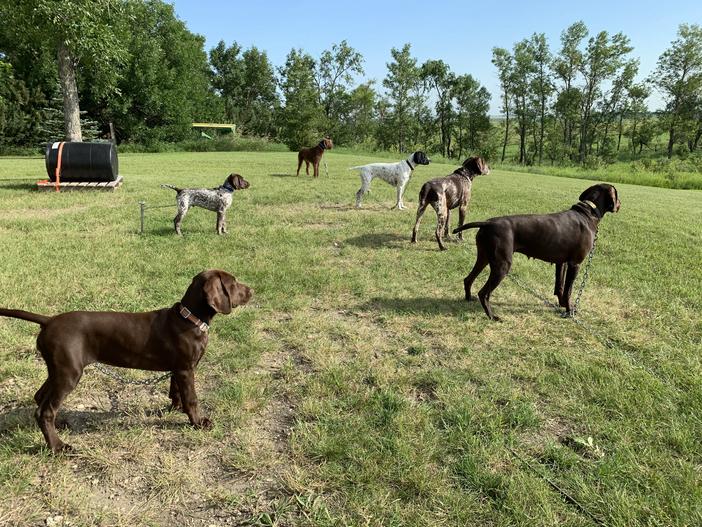 Training - Coco, Luke, Luna, Beulah, Dakota, Anna