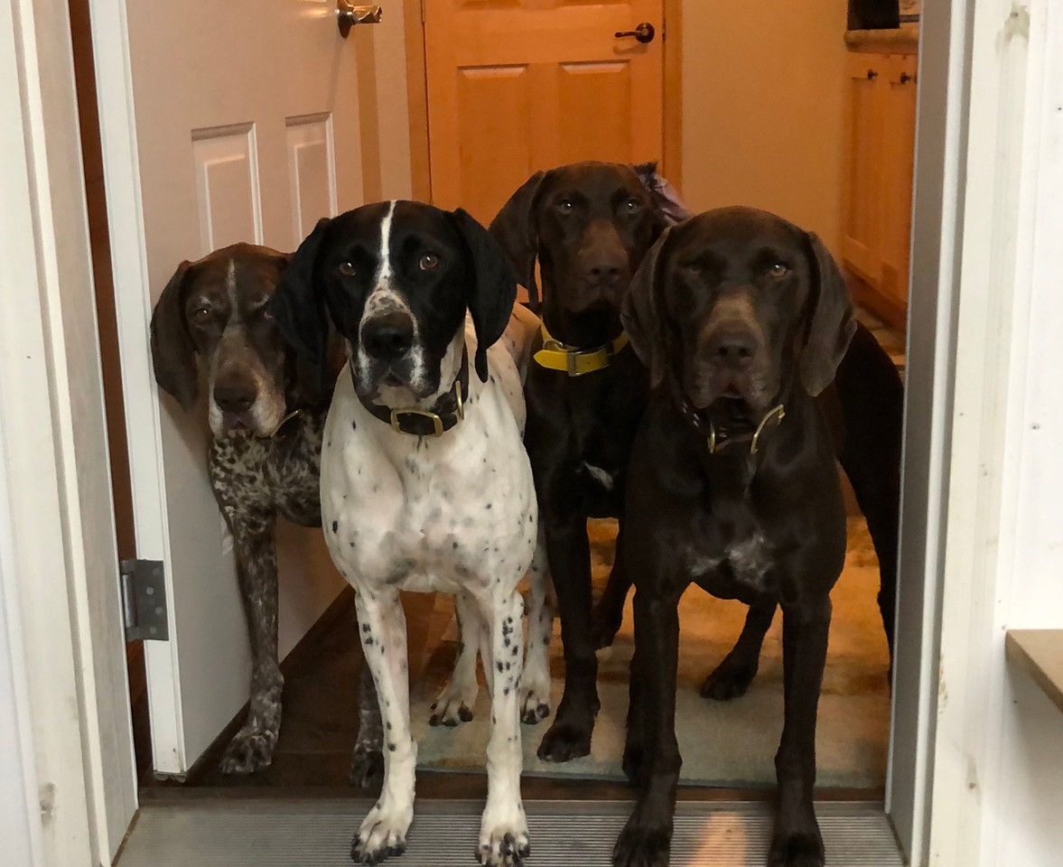 Dakota, Beulah, Coco, Anna
