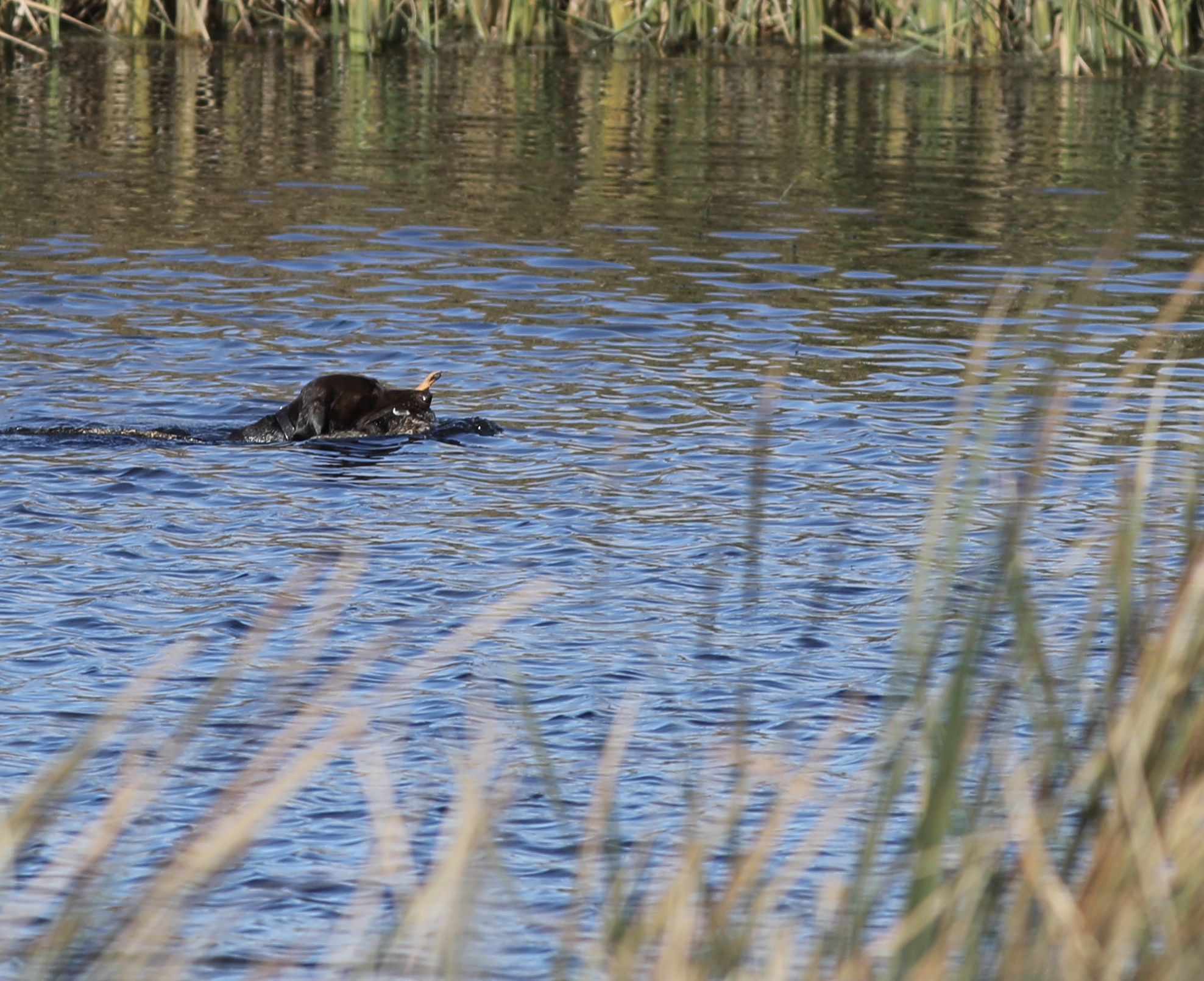 Solms Test - Anna duck retrieve