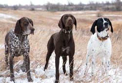 Dakota, Anna, and Beulah