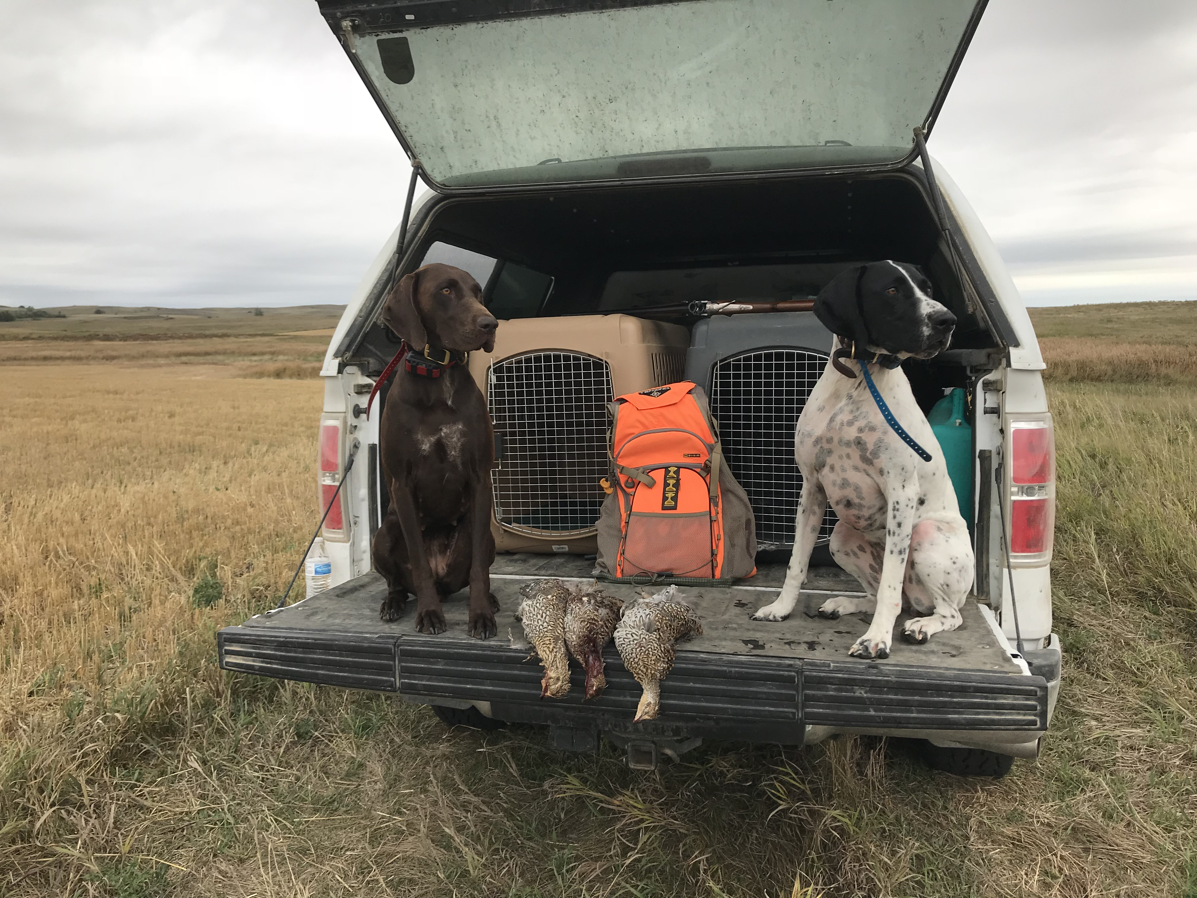 Grouse hunting - 2018