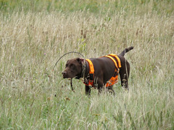 Anna - grouse hunting