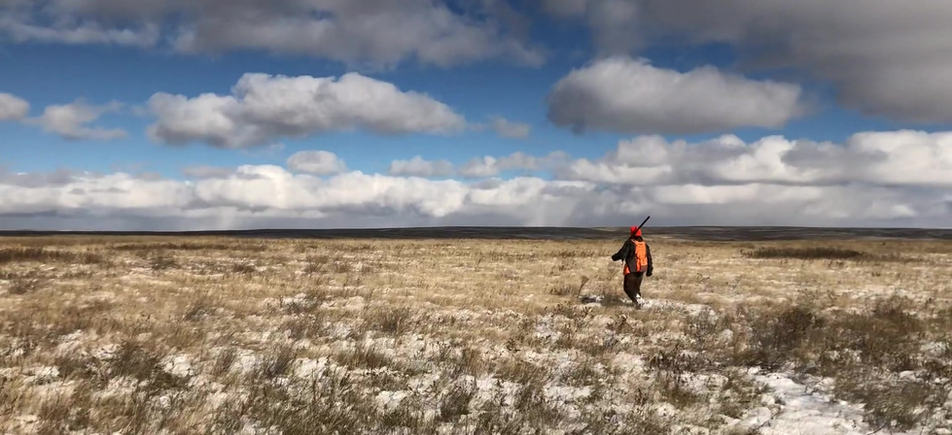 Anna: pheasant hunting, 2018