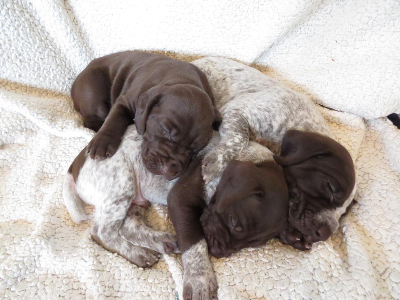 Puppy pile 5.JPG