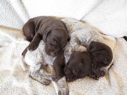 Puppy Pile - 'A' Litter