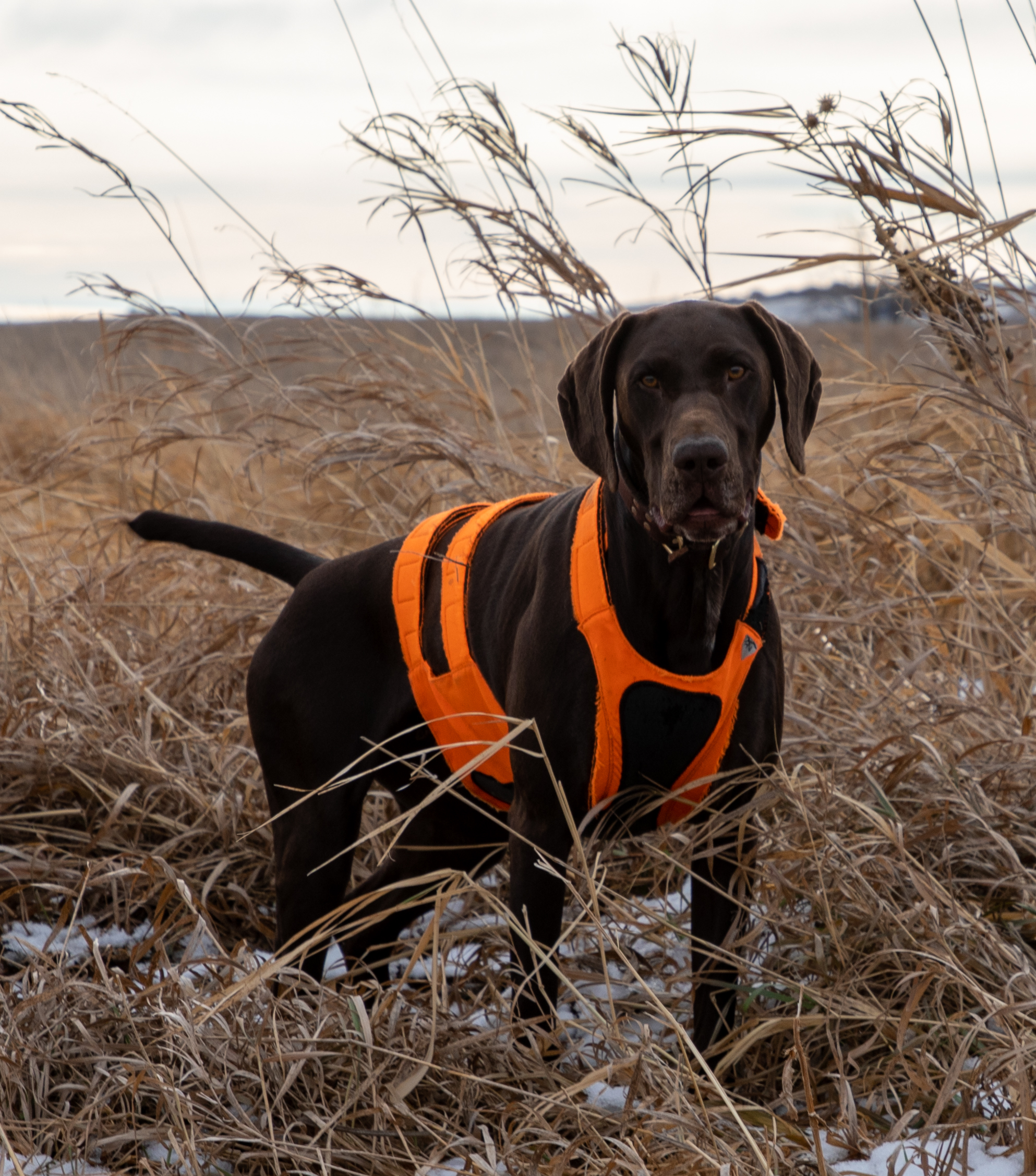 Grouse hunting - 2019