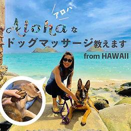 dogmassageのコピー.jpg