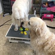 Jazzy and Bentley, Sharing