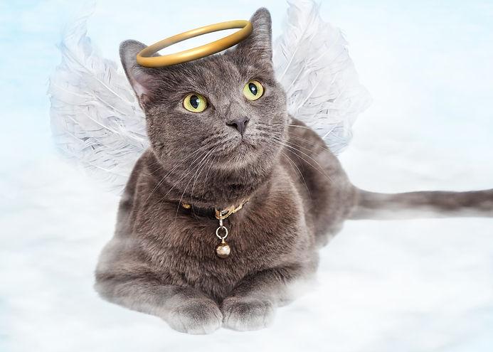 Grey Cat Angel resized.jpg
