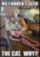 Dog makin sausage.JPG