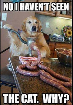Dog makin sausage.JPG