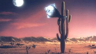 Détail de l'affiche du film Arizona Dream