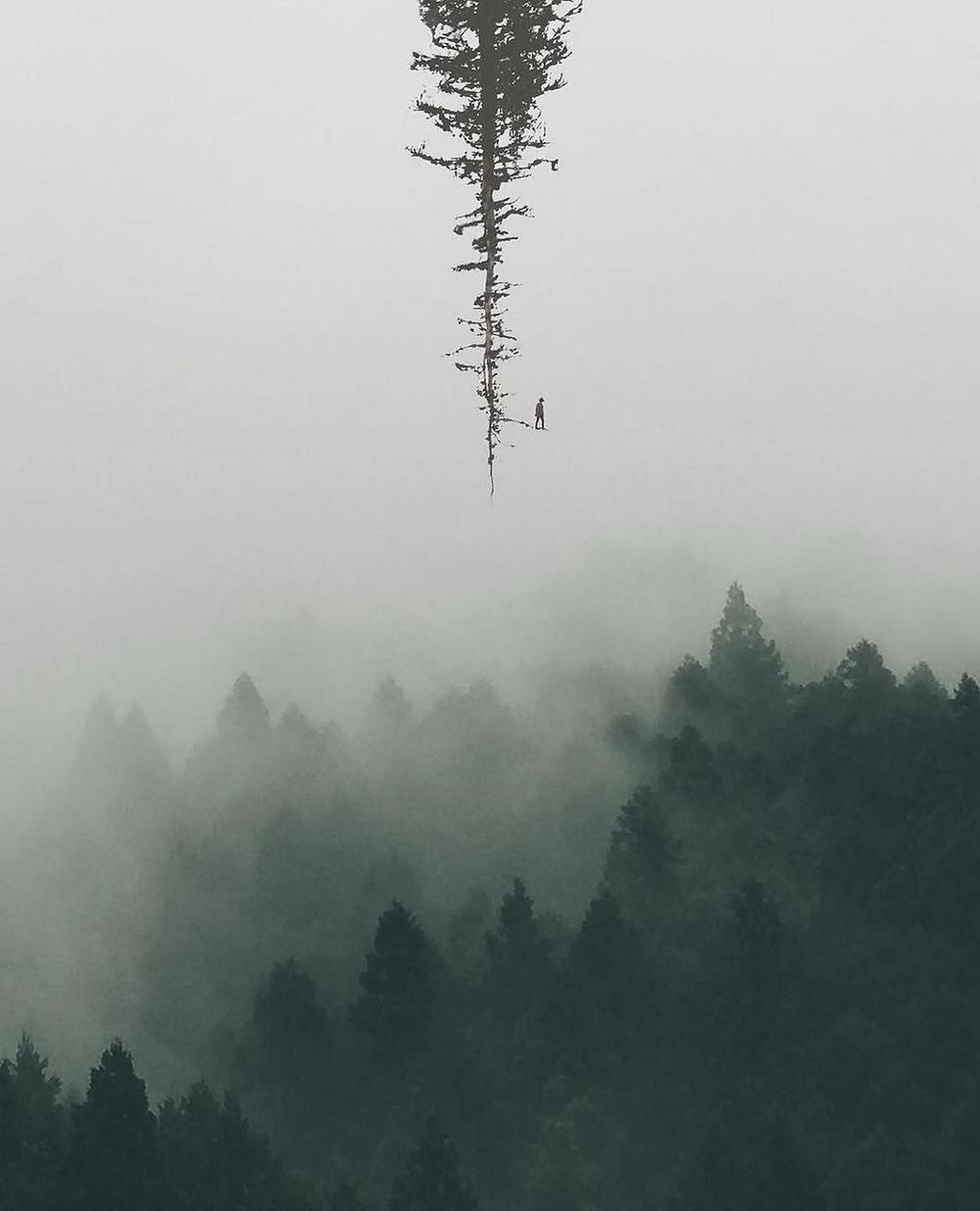 Photo de forêt dans la brume, une arbre pousse depuis le ciel, un homme à la cime de cet arbre