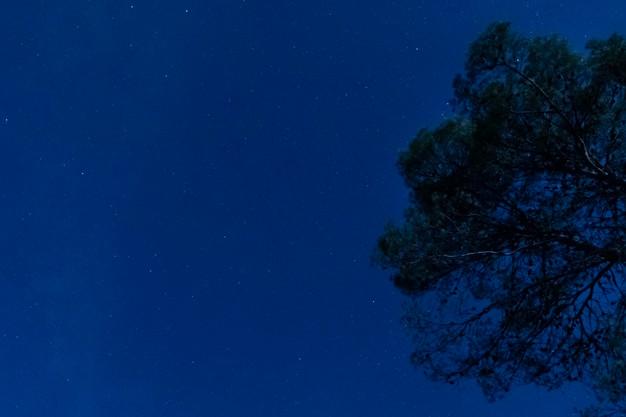 Photo d'un arbre dans une nuit bleue, Freepik