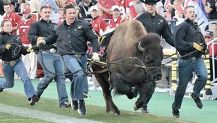 Ralphie the Buffalo voted best mascot in 'Best Mascot Bracket'