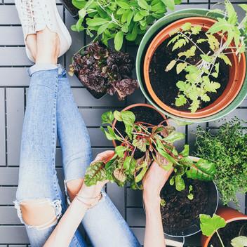 Urban Gardening - anbauen auf kleinstem Raum