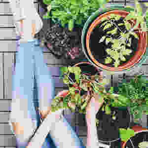 Urban Gardening, Plfanzen, Schuhe, tchibo