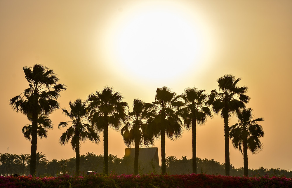 Palmen, Sonne, Bahrain