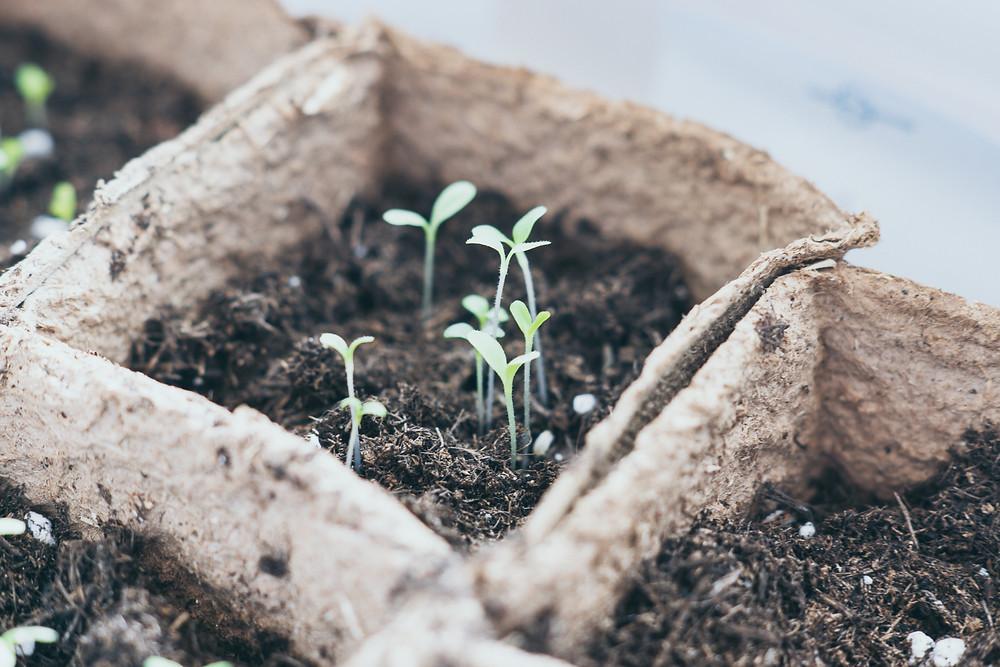 Anzuchttöpfchen, Samen, tchibo