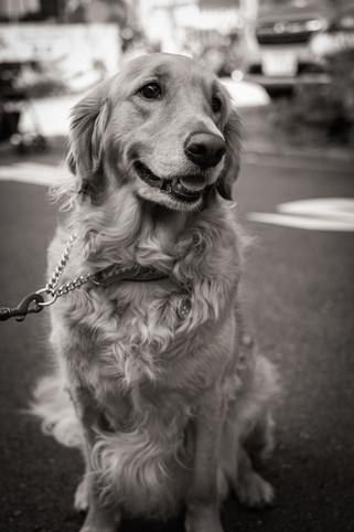 Model Smile