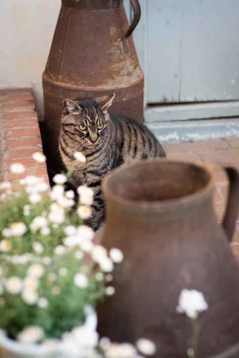 Storekeeper cat