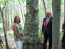 The Polish Soldier Tree.JPG